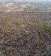 2-Bolsonaro-blames-NGOs-for-Amazon-fires.jpg