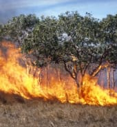 grass_fire_CSIRO_edit.jpg