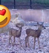 deer facebook