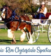 Clydesdale_Spec.jpg