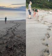 Croc prints.jpg