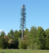 Mobile_Phone_Tree.jpg