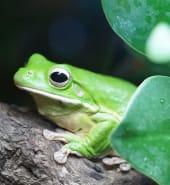 giant-tree-frog-942682_1280.jpg