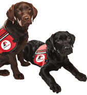 smart-pups-assistance-dogs.png