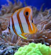 reef fish
