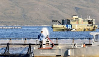 macquarie harbour salmon