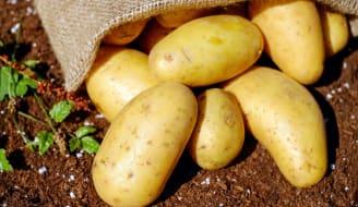 potatoes vegetables erdfrucht bio 144248