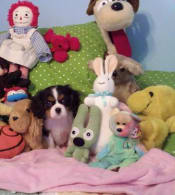 Lacey with some of my old toys :)