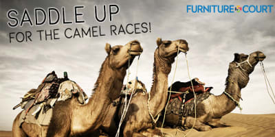 slide-camelraces.jpg