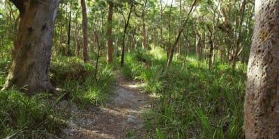 Bushland,_Royal_National_Park,_The_Coast_Walk-Australia.jpg