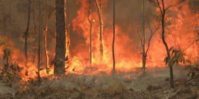 bushfire dc.JPG