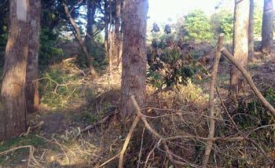 Tree clearing (1).jpg