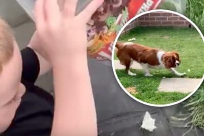 dog eats boys butterfly