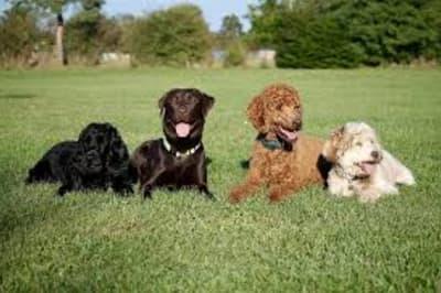 dogfriends