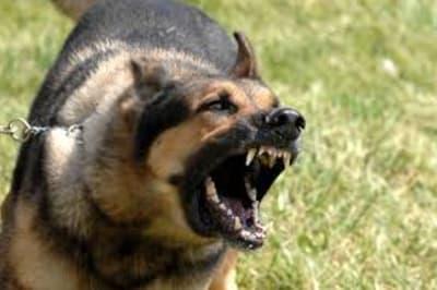 dogbarking