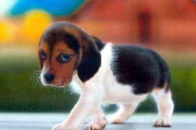 puppypic1