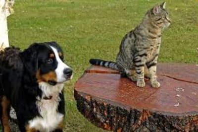 dogandcatnew