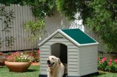doginbackyard