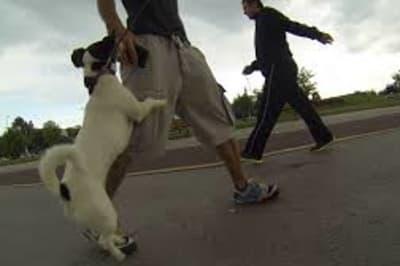 dogjumping