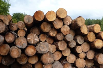 tree, plant, wood, trunk, pine, produce, soil, lumber, tree trunk, logs, timber, saw mill, man made object, woody plant, Free Images In PxHere