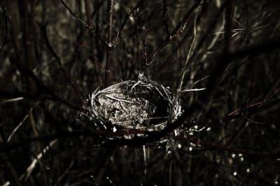 Empty Nest photo shoot goes viral.jpeg