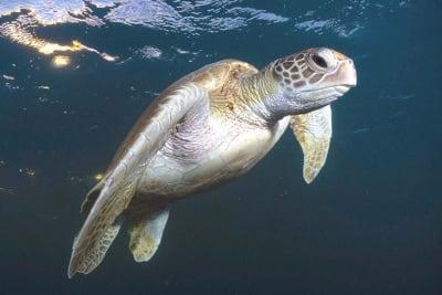 AM_DES_turtle_21062021.JPG