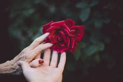 flower 2577944 640