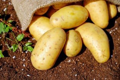 potatoes 1585075 640