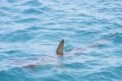 sharksighting