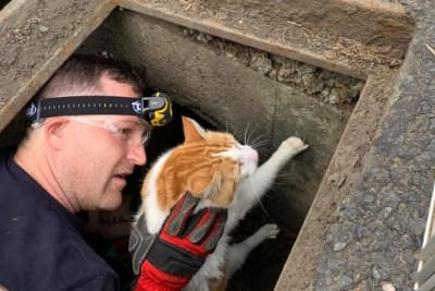CAT STUCK IN DRAIN