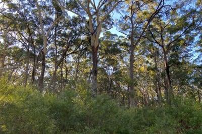 Manyana_Forest_April_2021.JPG