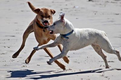 dog attack beach 949 power fm vinventia shoalhaven