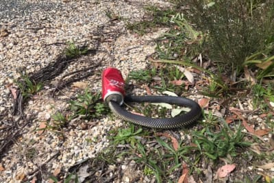 snake in spot of bother