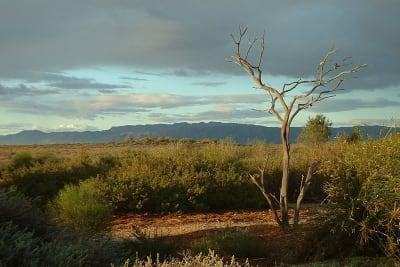 arid gardens.jpg