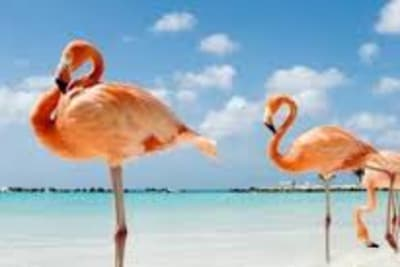 Baha Mar Flamingo
