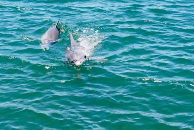 whyalla marina dolphin.jpg