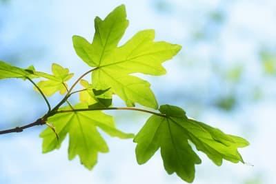 leaves 6086723 640