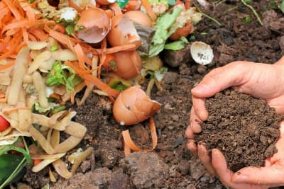 compost 6053136 640