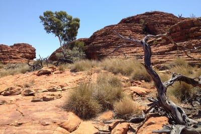 outback-405656_960_720.jpg