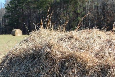 hay-pile-66405_960_720.jpg