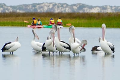 Photo_of_Coorong_by_Sally_Grundy_supplied_by_the_Department_for_Environment_and_Water.jpg