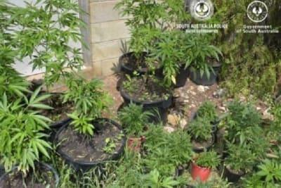 22 Oct cannabis Mobilong 2