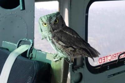 Sky_Aviation_OWL.jpg