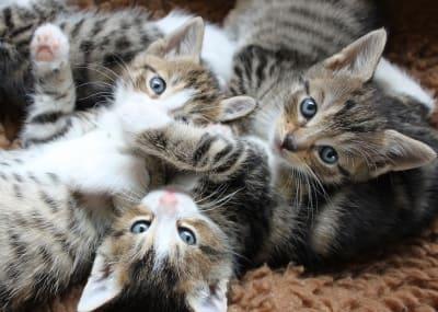 cat 3699204 960 720