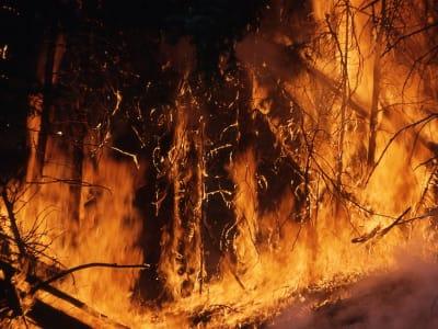 wildfire 1138193 960 720