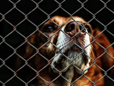 animal-welfare-1116203_960_720.jpg