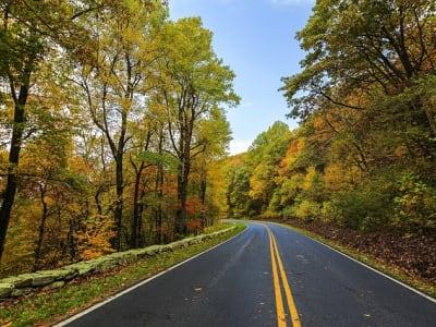 autumn-1785617_640.jpg