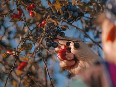 berries-5679562_1920.jpg