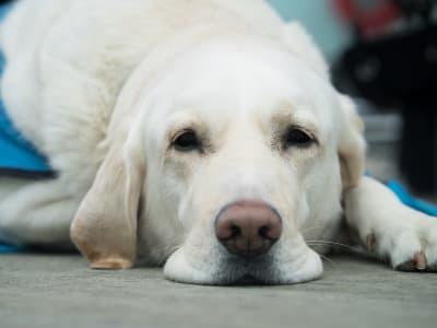 dog-3175814_1280.jpg