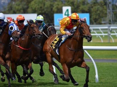 horses-380406_640.jpg
